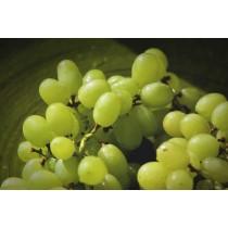美國加州 綠色無籽葡萄